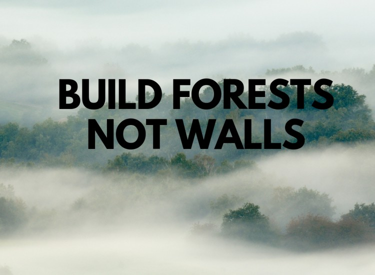 BUILD FORESTS NOT WALLS.jpg