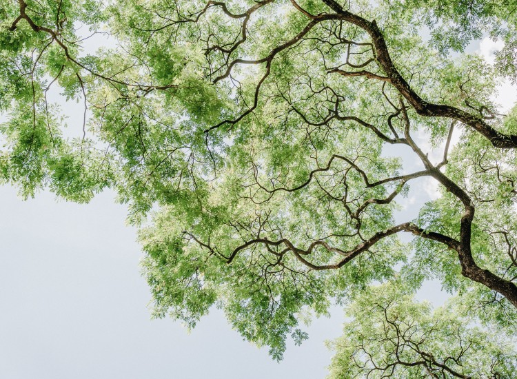 green-leafed-tree-low-angle-photography-1313807.jpg